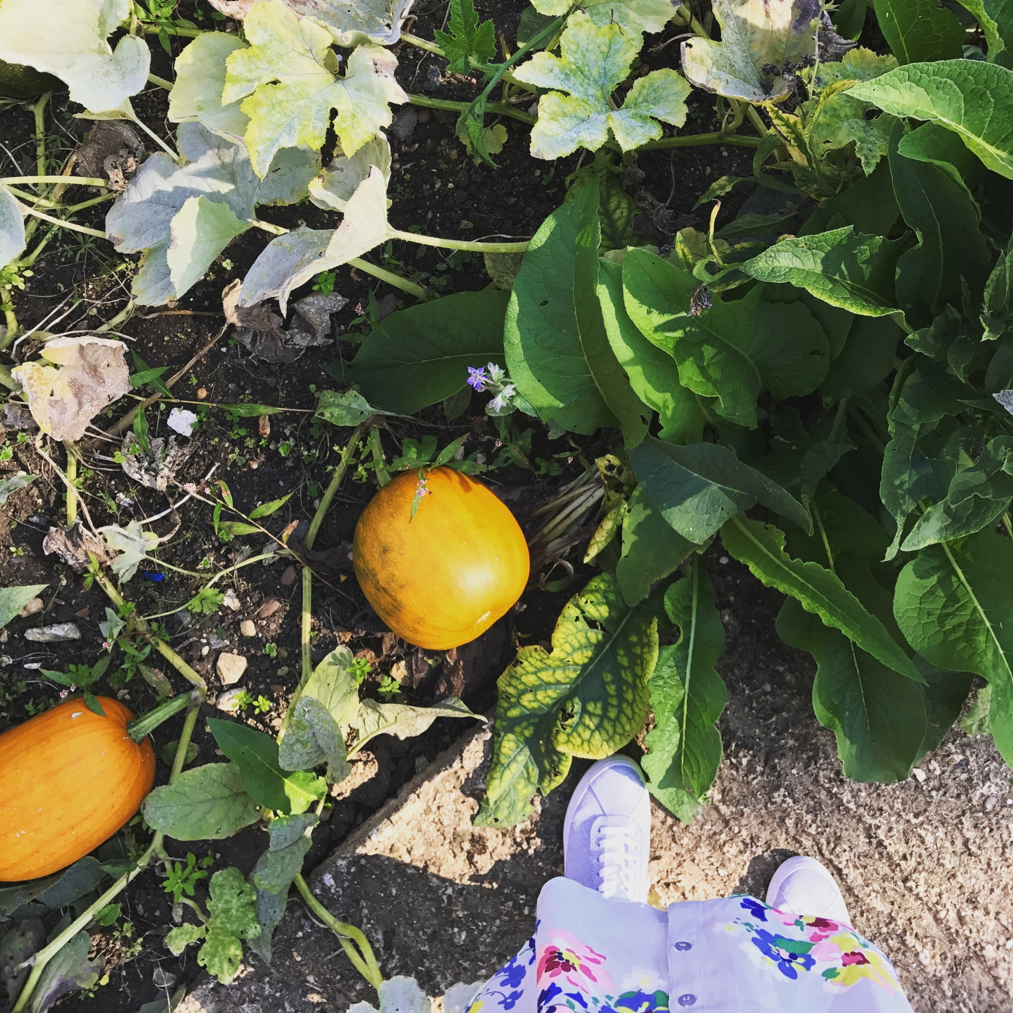 blogtober pumpkin patch